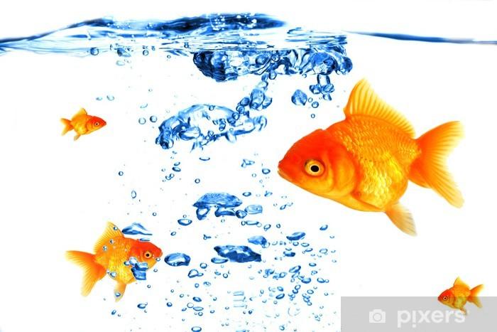 Papier peint vinyle La respiration des poissons d'or sous l'eau - Animaux marins