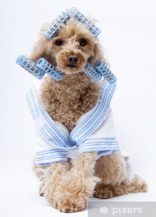Fototapeta winylowa Dog Curler - Moda