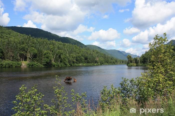 Fototapeta winylowa Łosie w parku narodowego Jacques Cartier, Quebec, Kanada - Ameryka