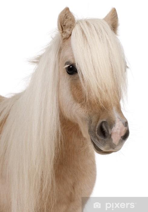 Fototapeta winylowa Palomino Shetland pony, Equus caballus, 3 lat - Naklejki na ścianę