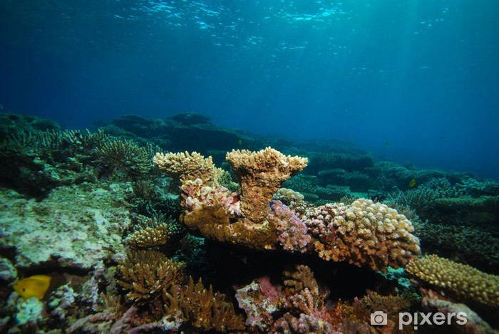 Vinilo Pixerstick Underwater view, coral reef - Arrecife de coral