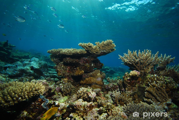 Sticker Pixerstick Vue sous-marine, récif corallien - Récif de corail
