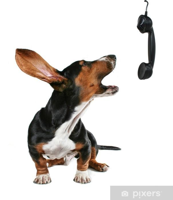 Sticker Pixerstick Un chien qui hurle au téléphone - Concepts