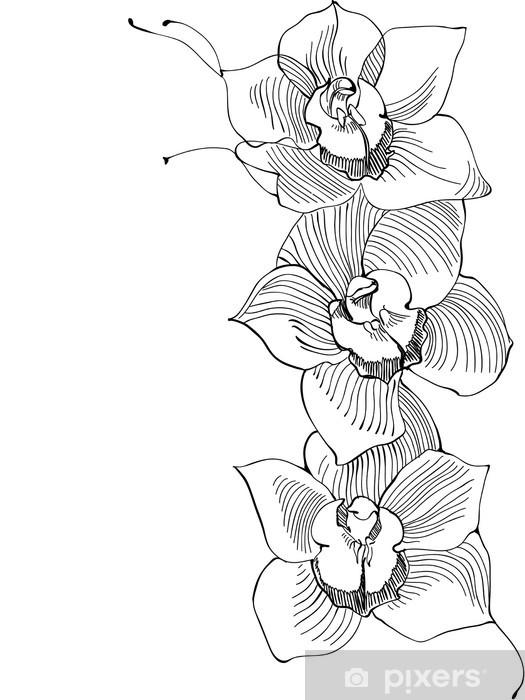 Carta Da Parati Disegno Orchidea Immagine In Bianco E Nero