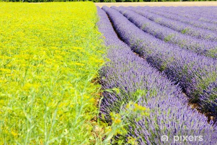 Papier peint vinyle Champ de lavande, Plateau de Valensole, Provence, France - Europe
