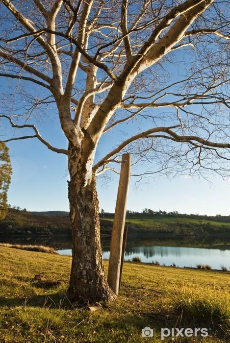 Sticker Pixerstick Hiver bouleau, lac Trevallyn, Launceston, Tasmanie, Australie - Saisons