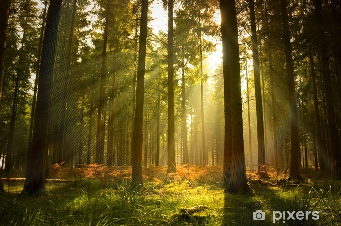 Beautiful forest Vinyl Wall Mural - Styles