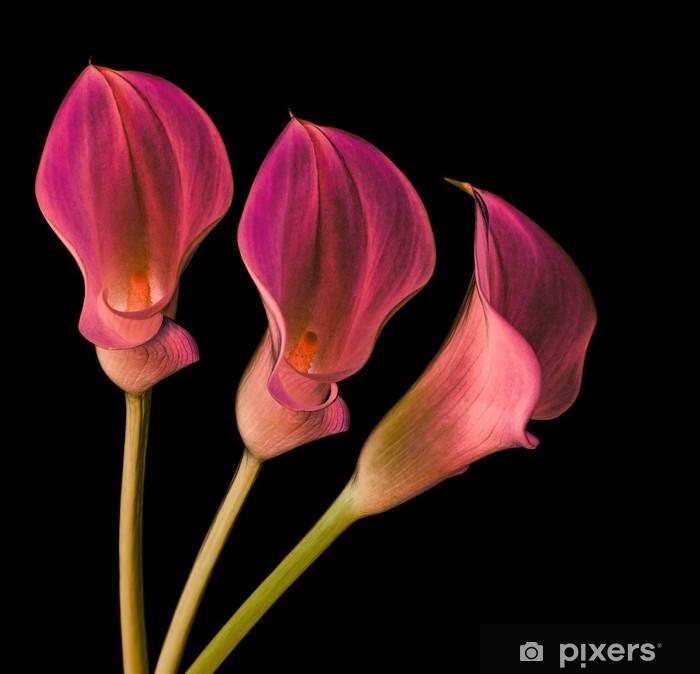 Plakát Magické Callas - Květiny