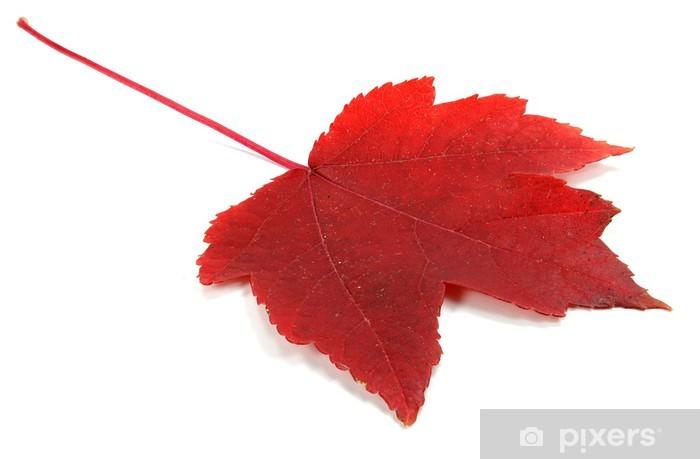 Papier peint vinyle Herbstblatt - Arbres
