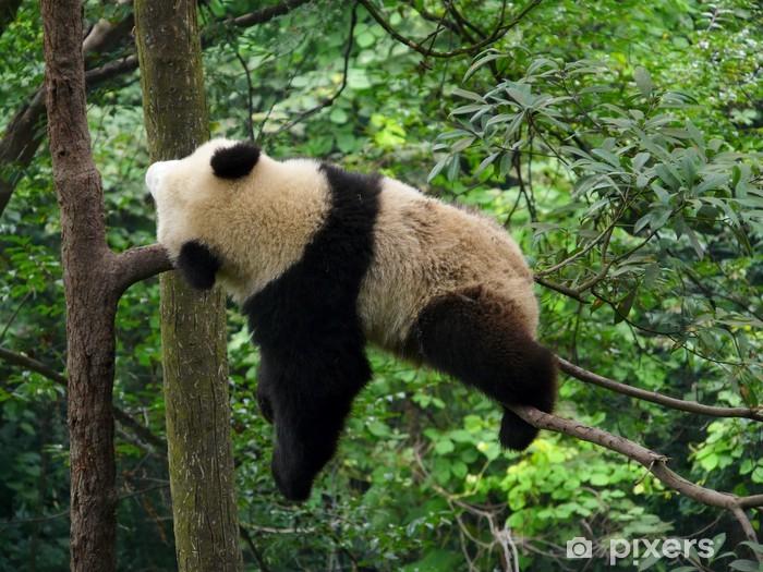 Panda Qui Dort Wall Mural Pixers 174 We Live To Change