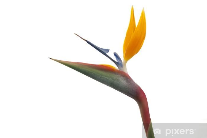 Nálepka Pixerstick Bird of paradise květ (Strelitzia reginae) izolovaný na bílém b - Květiny