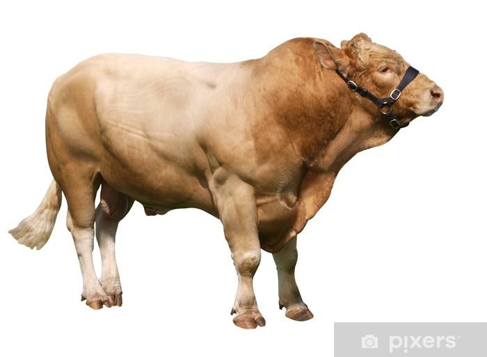 Pixerstick Aufkleber Große Gelbvieh bull - Säugetiere