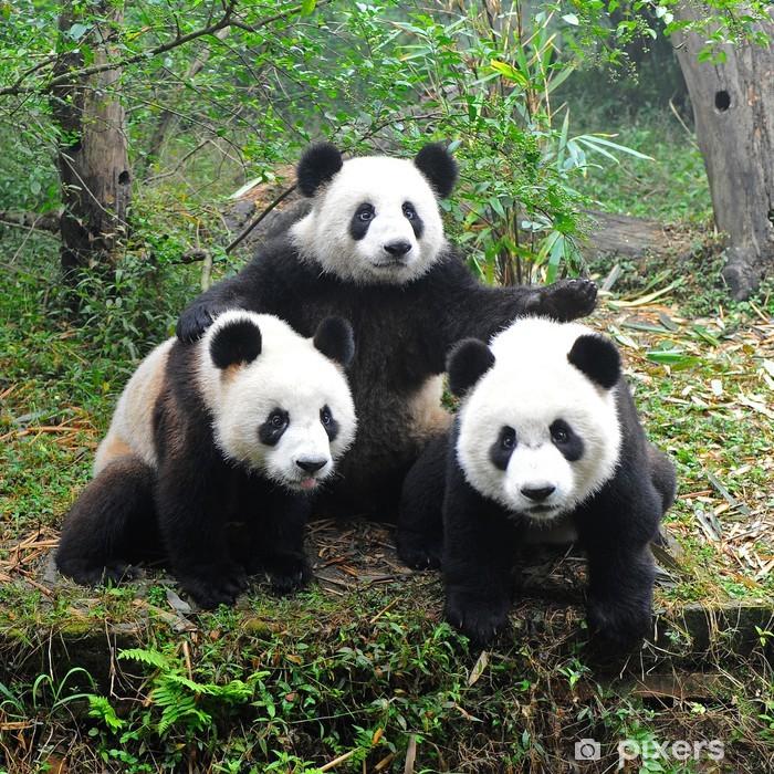 Buzdolabı Çıkartması Kamera için poz dev panda ayısı - Pandalar