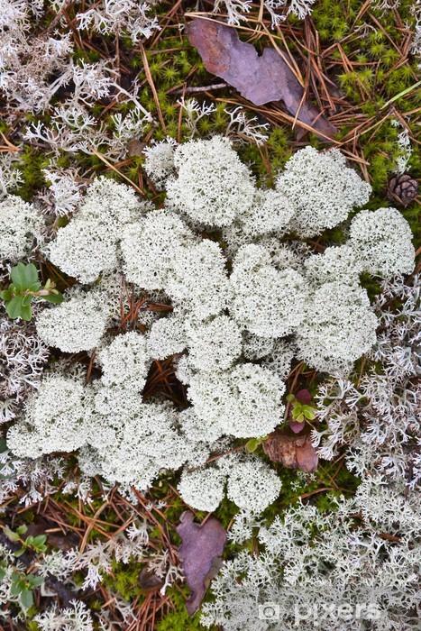 Reindeer moss Vinyl Wall Mural - Plants