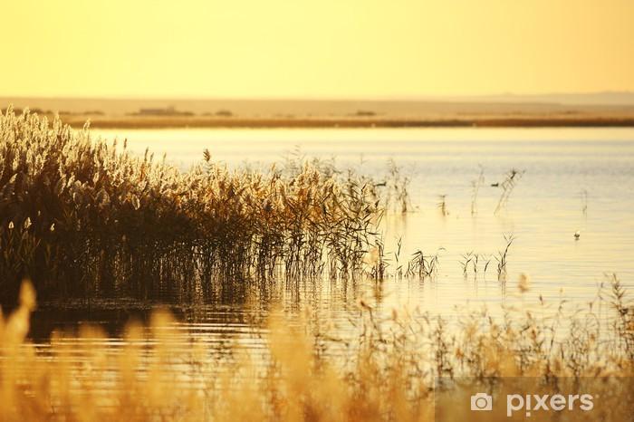 Vinyl Fotobehang Riet stengels in het moeras tegen zonlicht. - Seizoenen