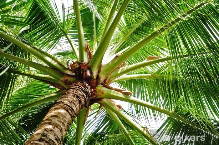 Fotomural Estándar Coconut Palm - Vacaciones