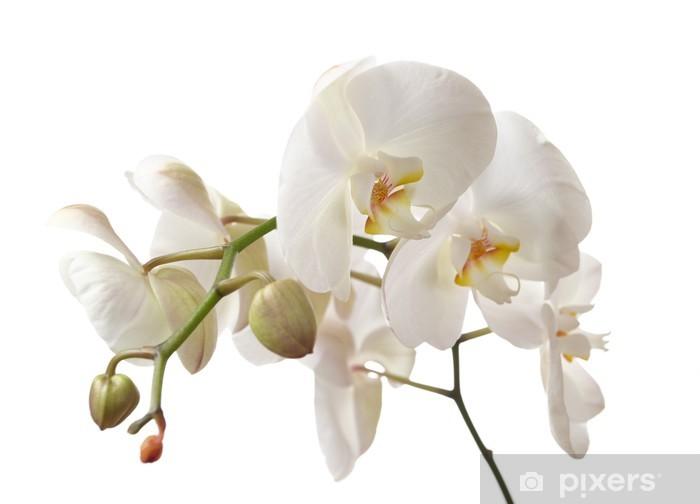 orchid Pixerstick Sticker - Wall decals