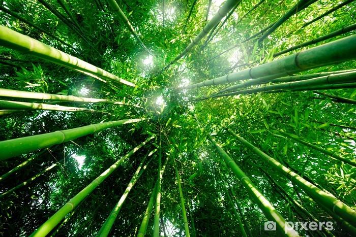 Papier peint vinyle Souhaitez Bambou Forêt - Forêt