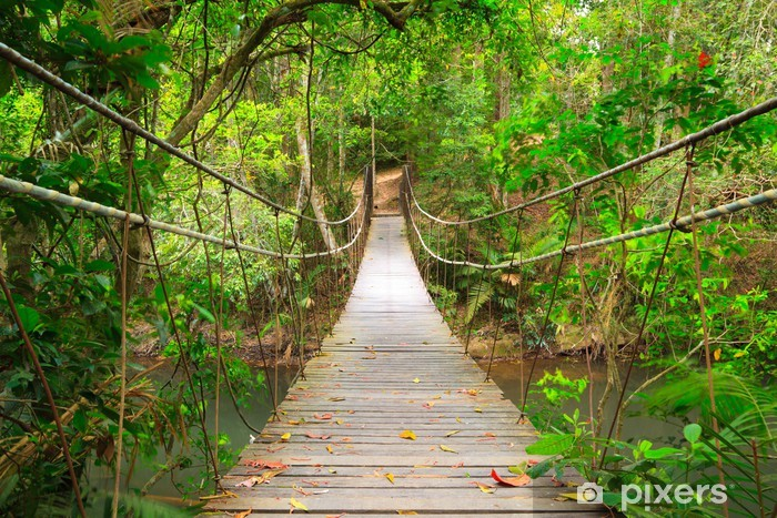 Bridge to the jungle,Khao Yai national park,Thailand Pixerstick Sticker - Styles