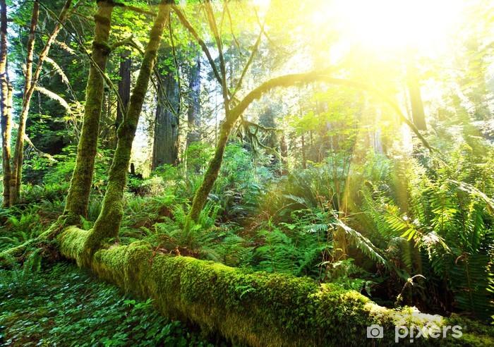 Zelfklevend Fotobehang Regenwoud - Thema's