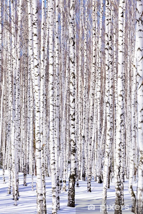 Winter birch forest - winter serenity. Ideally suits for calenda Washable Wall Mural - Themes