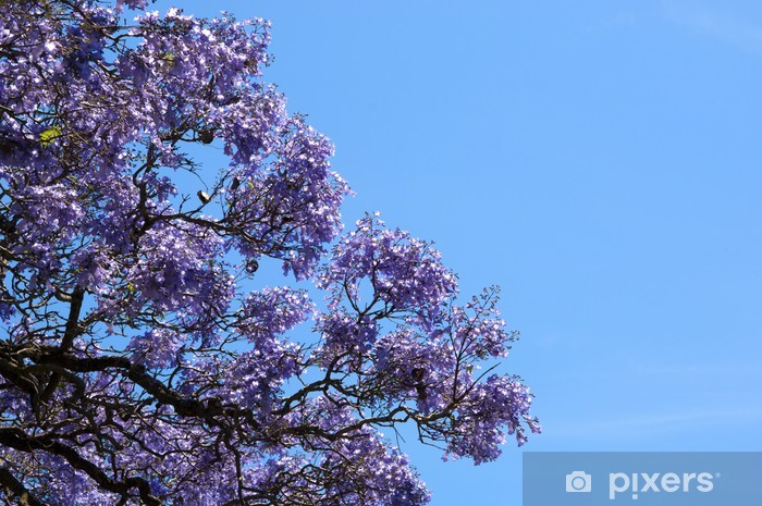 jacaranda tree wall mural • pixers® • we live to change