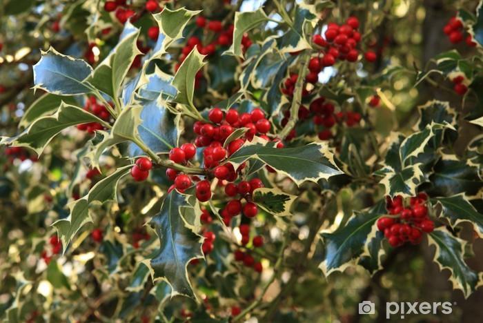 Sticker Pixerstick Houx bicolore commun ou ilex aquifolium - Fêtes internationales