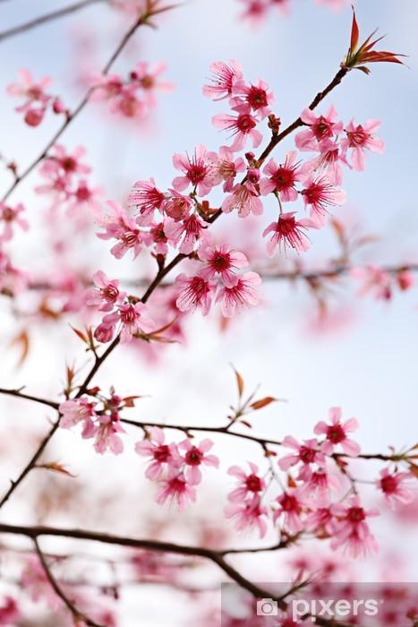 Pink Sakura Flowers Wall Mural Pixers We Live To Change
