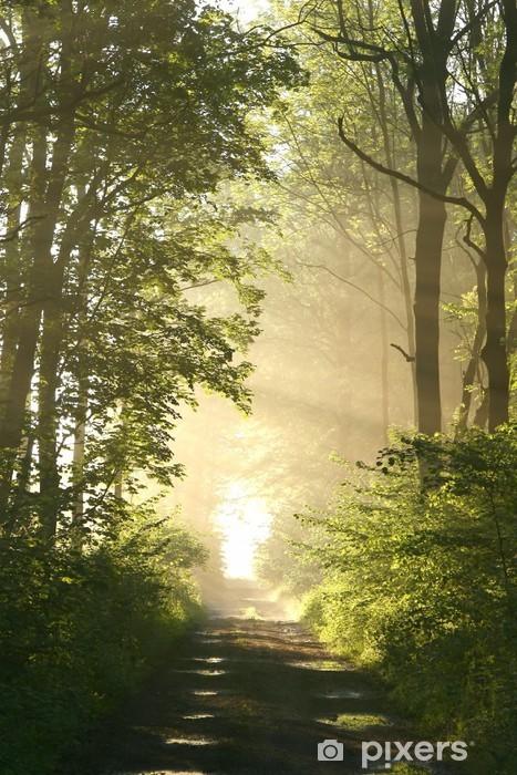 Papier peint vinyle Chemin de terre dans la forêt de feuillus sur un matin brumeux de printemps - Thèmes