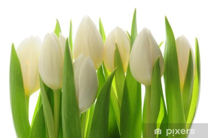 Fotomural Estándar Los tulipanes - Temas