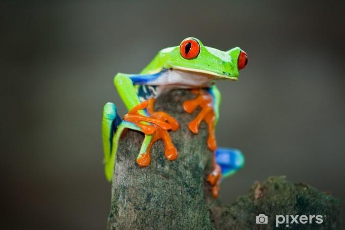 Naklejka Pixerstick Rotaugenfrosch, Frog, Costa Rica - Żaby