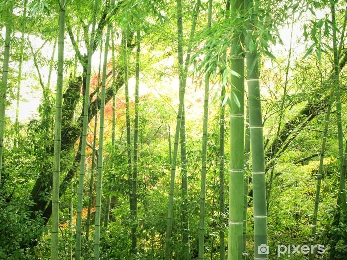 Fototapeta winylowa Bambus lesie - Tematy