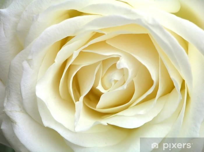 Papier peint vinyle Rose white - Thèmes