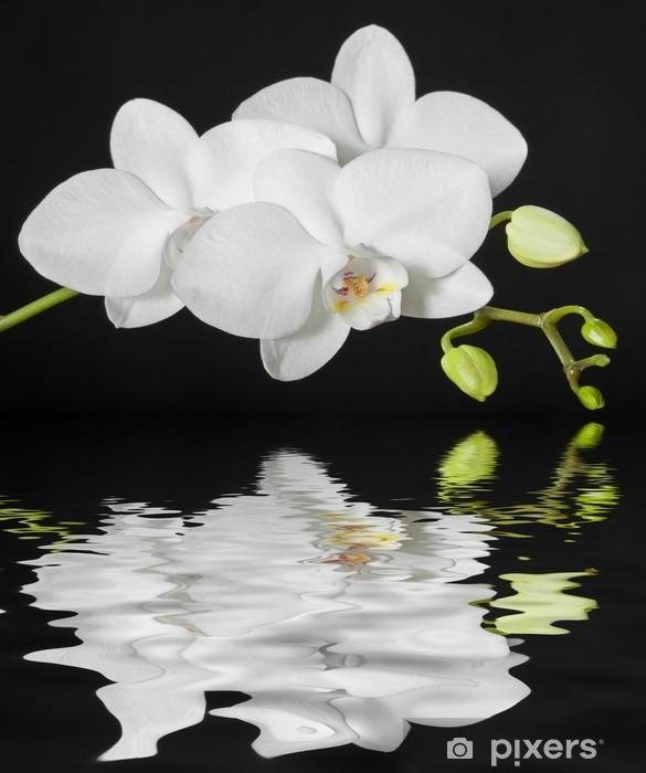 Papier peint vinyle Orchidée blanche - Thèmes