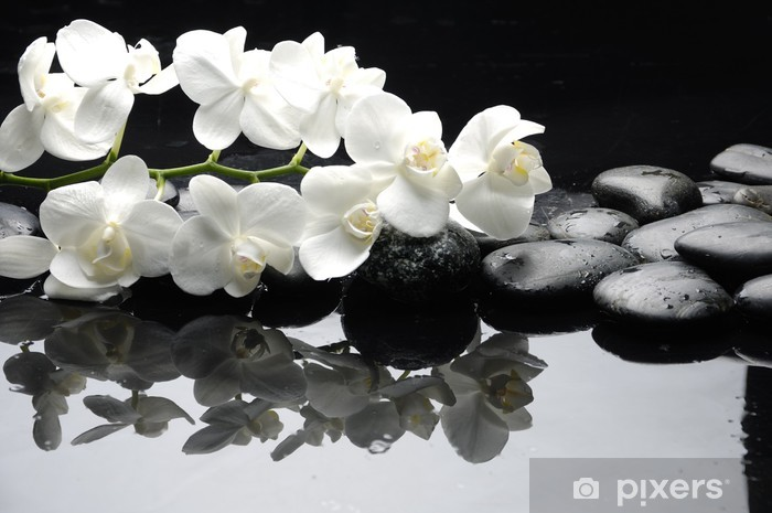 Close up white orchid with stone water drops Pixerstick Sticker - Styles