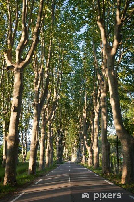Naklejka Pixerstick Piękny, pusty kraj, wysadzanej drzewami drogi w Prowansji jawor - Transport drogowy