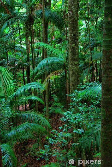 Regnskov ved Mount Warning, New South Wales, Australien Vinyl fototapet -