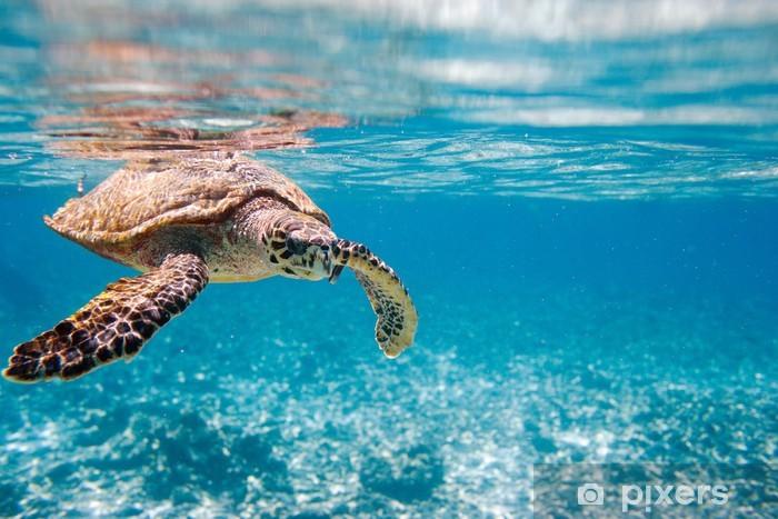 Papier peint vinyle La tortue imbriquée mer - Autres Autres