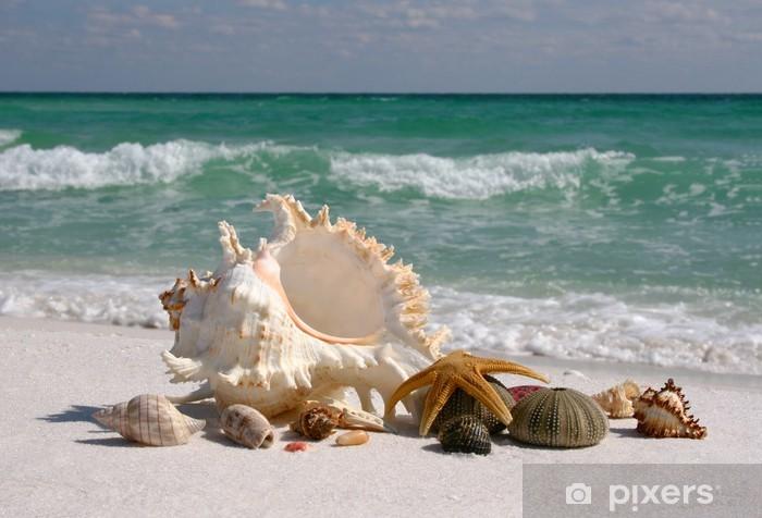 Vinyl Fotobehang Shells op White Sand Beach Florida's - Thema's