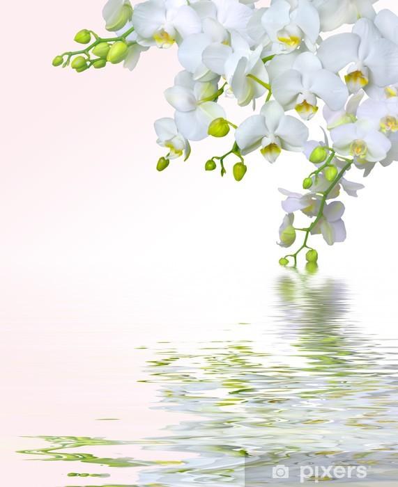 Fototapeta winylowa Piękne białe kwiaty orchidei odbicie w wodzie - Tematy