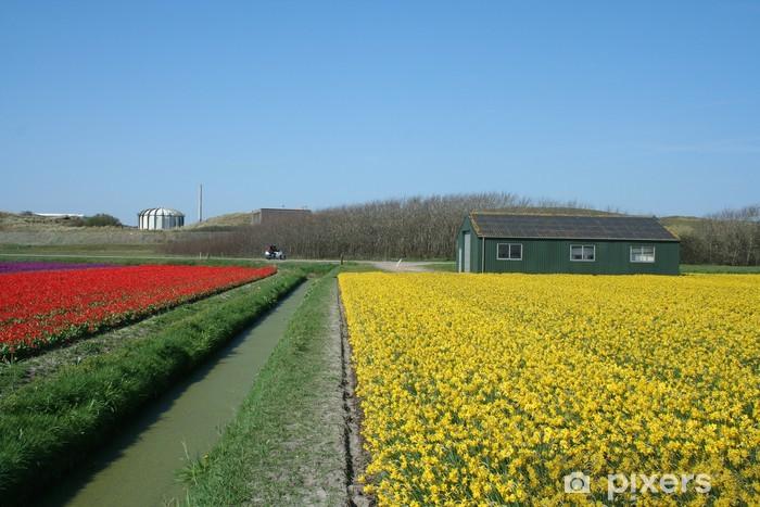 Vinylová fototapeta Bulbfields v Holandsku - Vinylová fototapeta