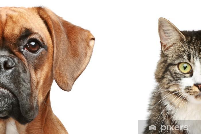 Fototapeta winylowa Psy i koty. pół kufy bliska portret - Ssaki