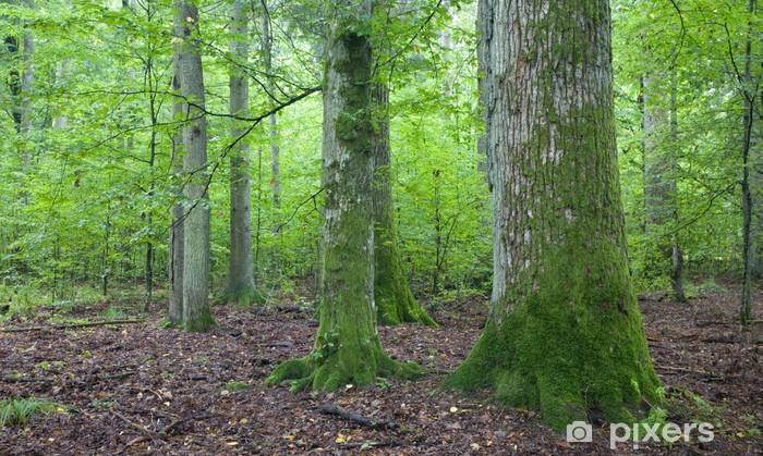 Sticker Pixerstick Vieux mousse enveloppé chêne dans Foest naturel - Saisons