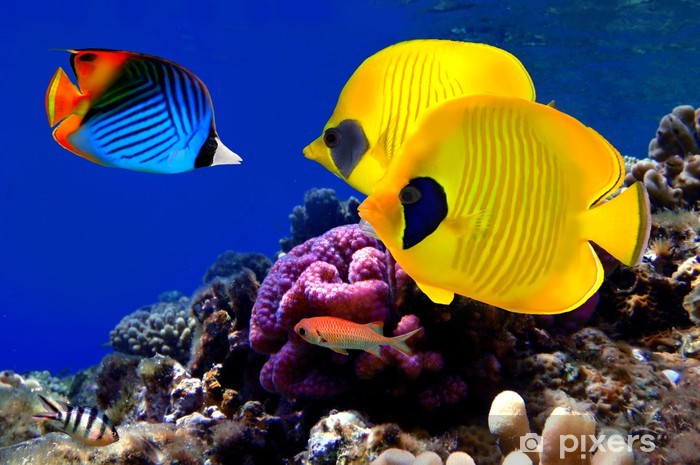 Underwater image of coral reef Vinyl Wall Mural - Themes