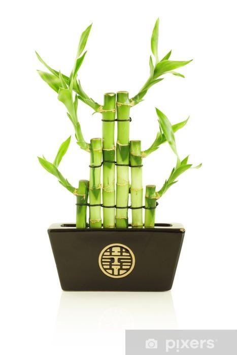 Fototapete Glucklicher Bambus Im Topf Pixers Wir Leben Um Zu