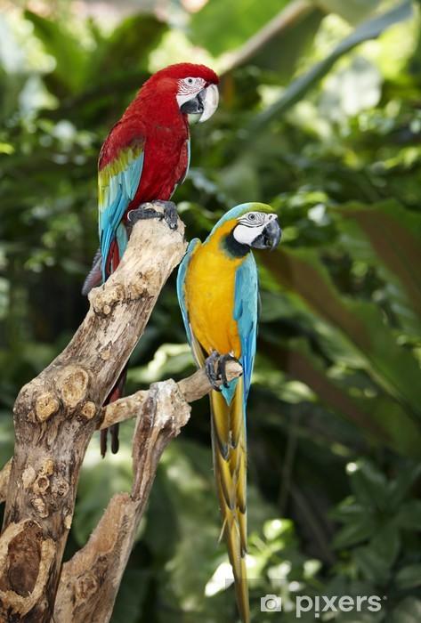 Fototapeta winylowa Dwie papugi w zielone lasy deszczowe. - Tematy