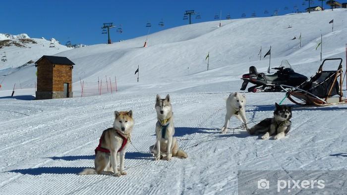 Vinyl Fotobehang Huskies - Wintersport