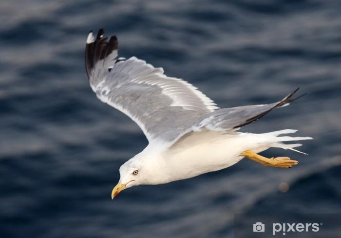 Carta da Parati in Vinile Bella bianco gabbiano sorvolano profonde onde blu - Uccelli