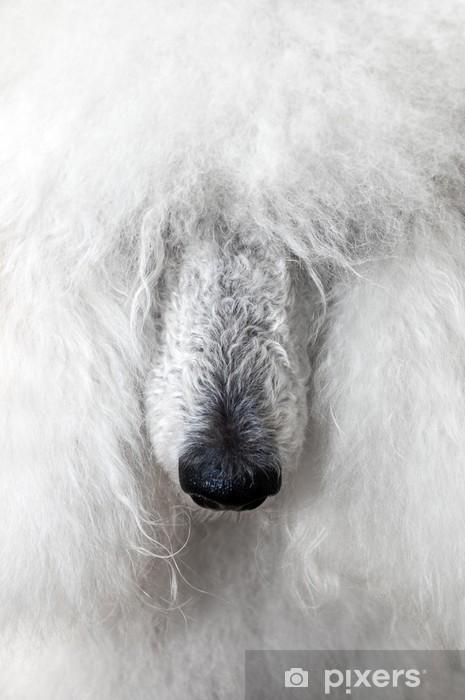 Fotomural Estándar Perro de lanas - Mamíferos