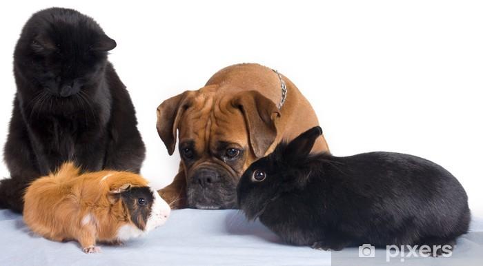 Pixerstick Sticker Hond, kat, konijn, cavia geheel - Zoogdieren
